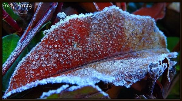 Frosty Morning by butterflydiva72