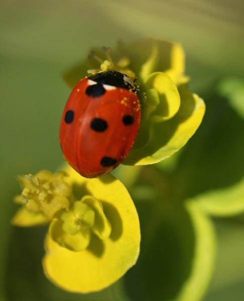 Ladybird 2 by bertie1983