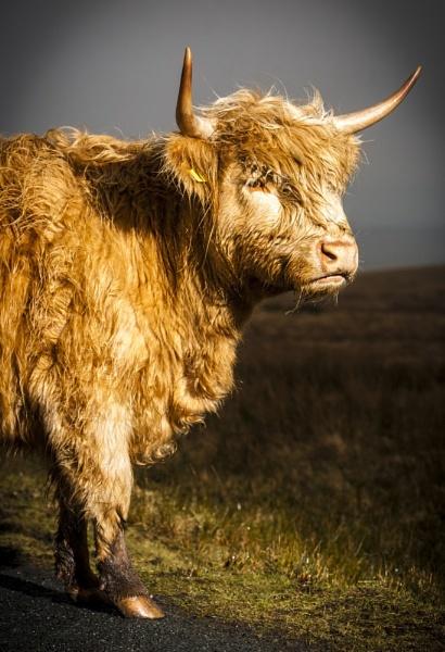 No Bull by ade_mcfade