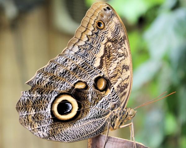 butterfly by sandk