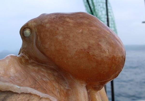 A Friendly Octopus by carpmanstu