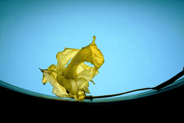 dried daff and the curve by reflectionsinlight