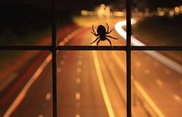 Spider Trails