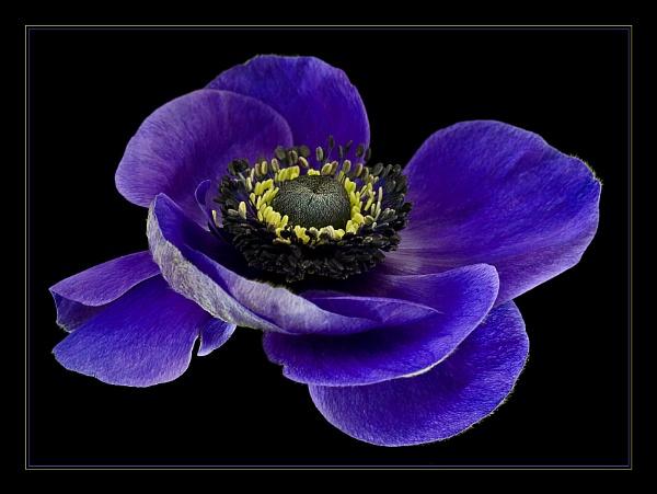 BLUE by ColouredImages