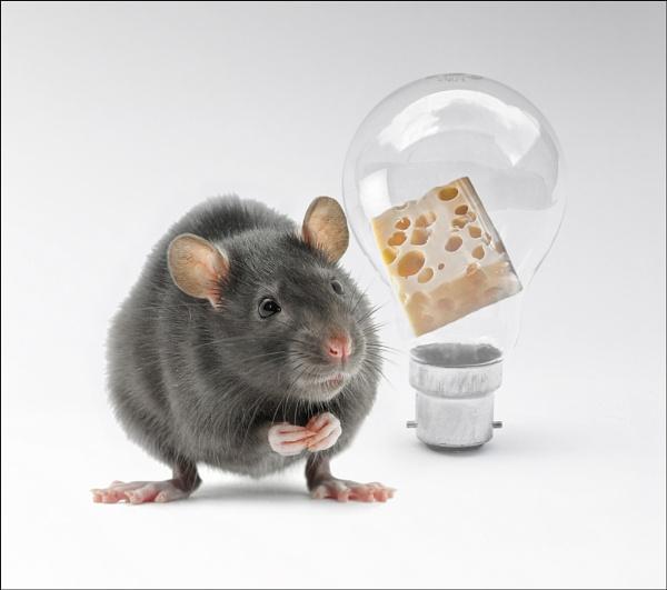 The Rat by clintnewsham
