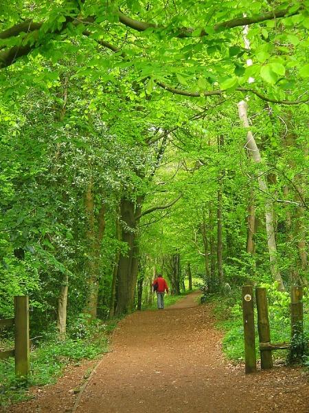 Standish Woods by Glostopcat