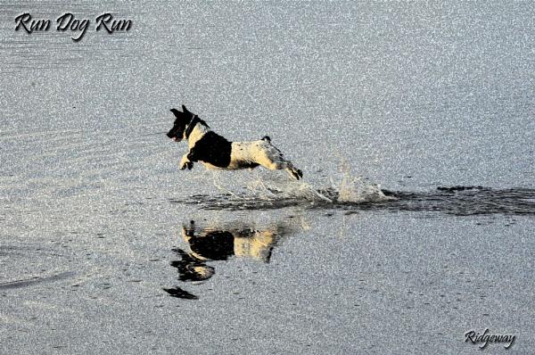 Run Dog Run by Ridgeway