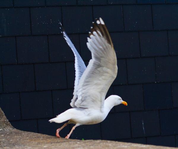 Taking flight by ejways