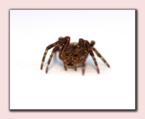 Spider by delboy1145