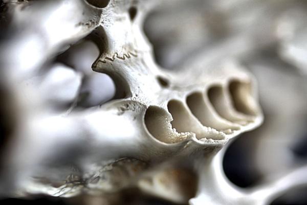Skull by markysparky