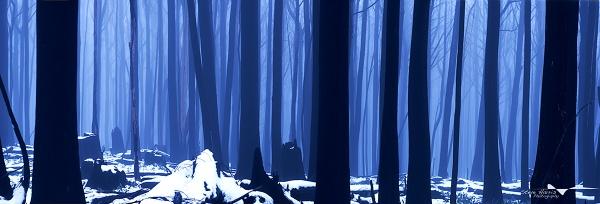 Ash & Snow by SteveHarry