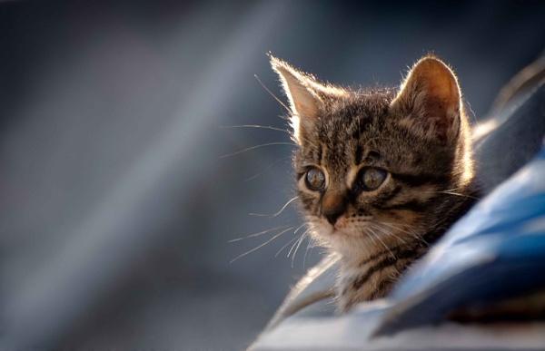 Ships Cat by Kim Walton