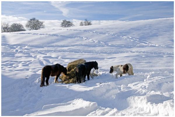 Hard Winter by andychatt