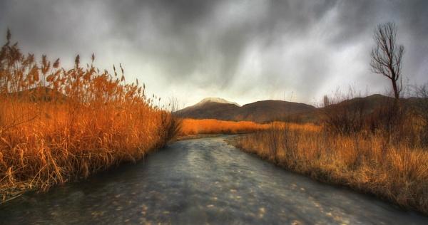 Woodlands by saeedyounesi