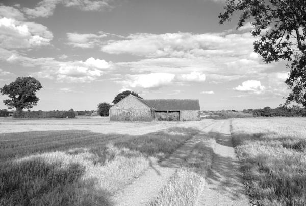 Norfolk Farmland by mixpics