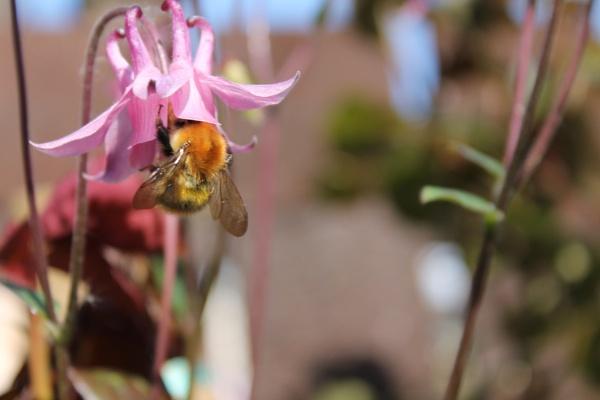 buzzing around by sandk