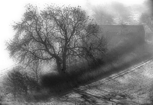 tree of birds by reflectionsinlight