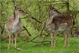 Deer from the nex 7