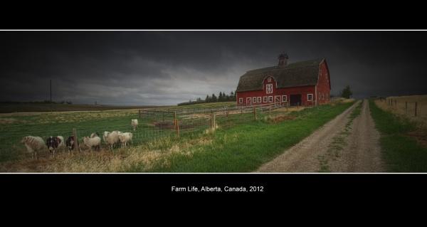 Farm Life, Alberta, Canada, 2012 by pgoodwill