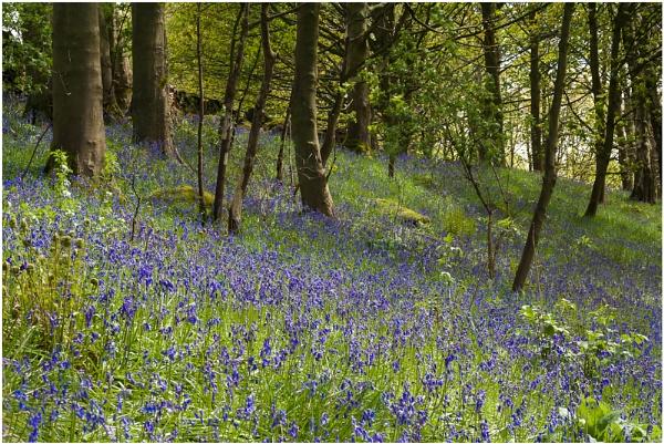 bells of blue by paulrankin