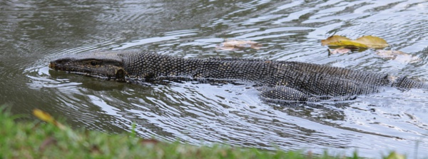 Water Monitor by agednovice