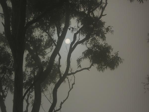 Sun through mist - Nandi Hills by claudius_v