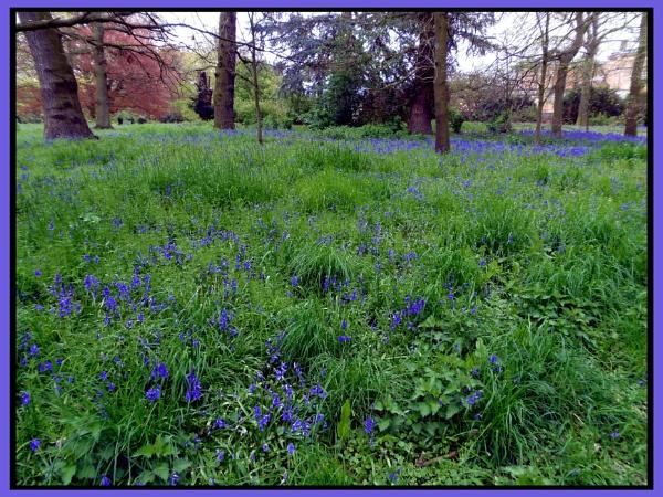 Blue Bells by vikki9876