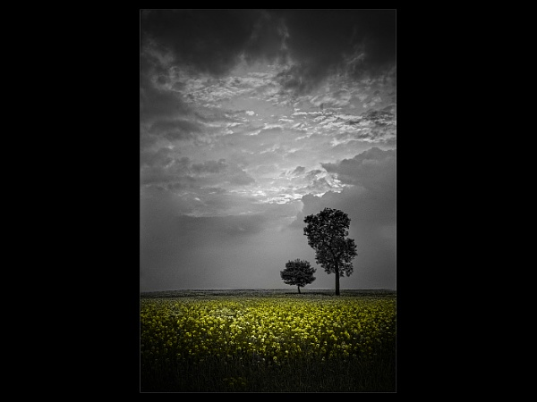 Rape Field Storm by TickRoe
