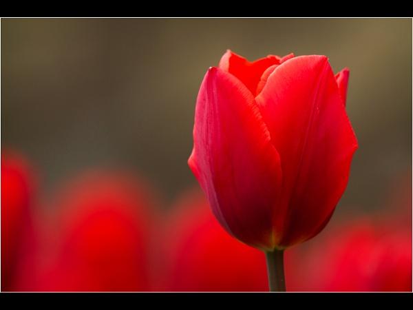 A Splash of Red by emlad