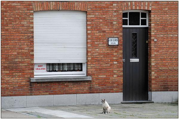 Bad times for cat Consuela della Aspedistra. by Cor