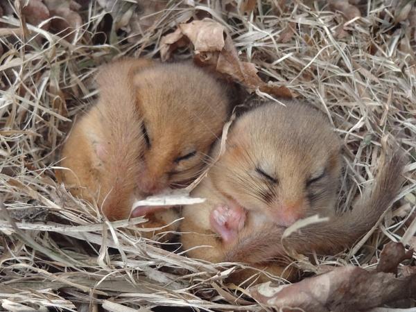 Sleeping Beauties by Gio