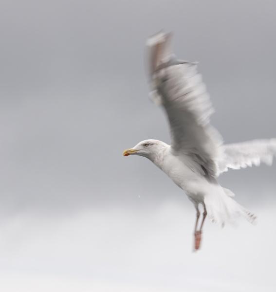 Bird on the Wind by Rachel81