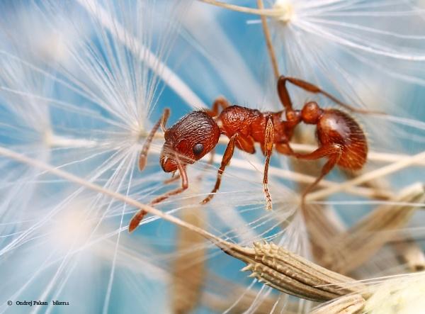 Ant by biker11