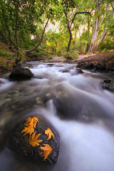 autumn  adream by saeedyounesi