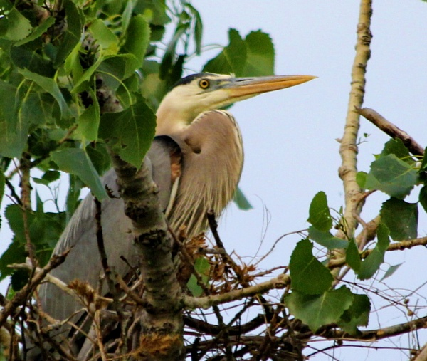 Heron Rookery by Mbopp50
