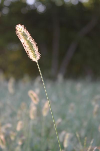 Grass by Fatbaldhobbit