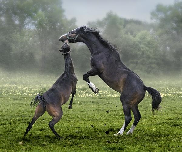 Horses 2012 [ #1] by missmoon