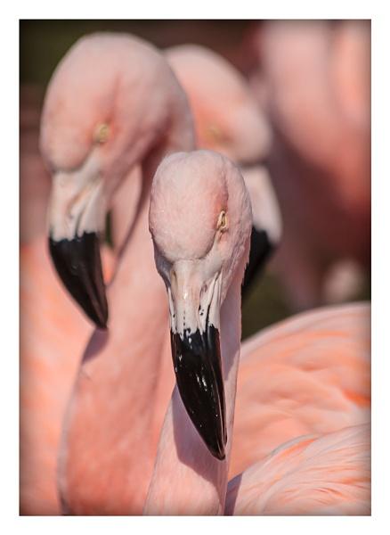 Flamingo,s 2 by jason_e