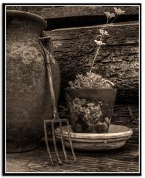 Tinker bells garden