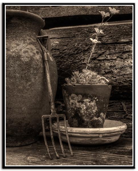 Tinker bells garden by Briwooly