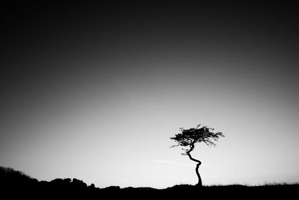 Solitude II by Mwande