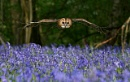 Winged Assassin Of Bluebell Wood by Sweetmart