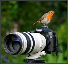 Cheeky B.......bird !