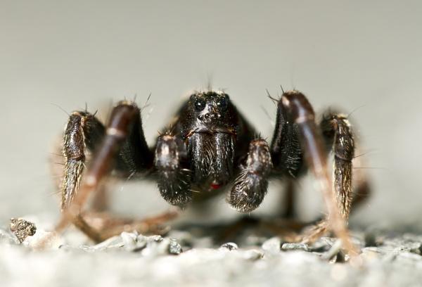 Spider Macro by rowejay
