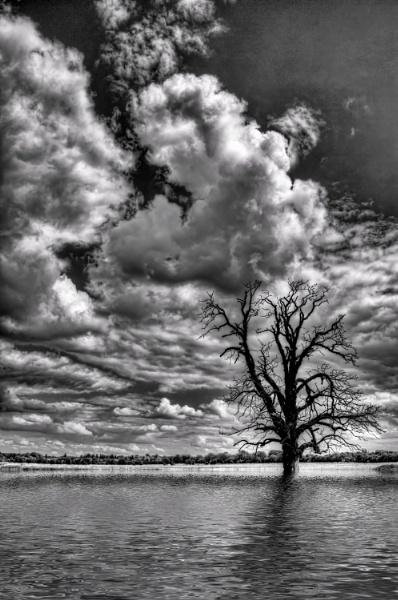 The Flood by NobbytheNobster