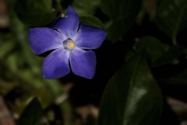 wild flower by billkouk