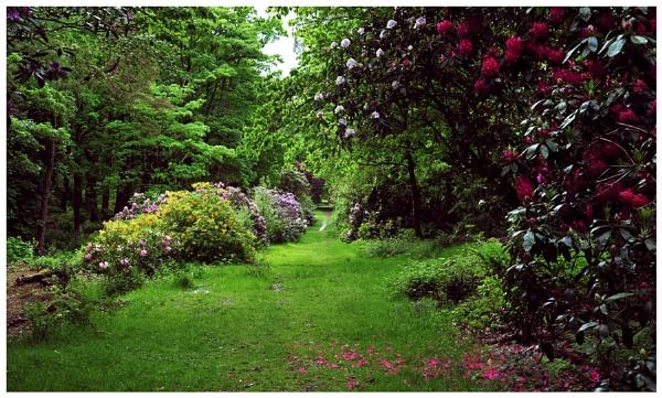 "\""Along a Grassy Path\"" by RonnieAG"