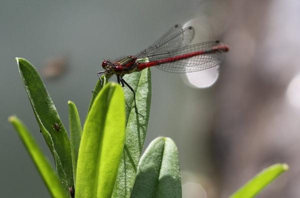 Bug Eyes by SueSelley