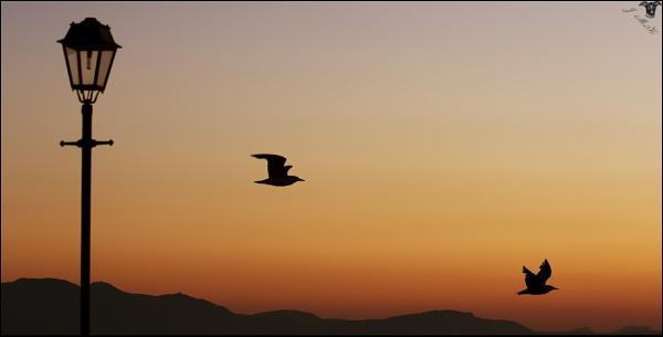 Sunset Silhouettes. by Jim_McKinna