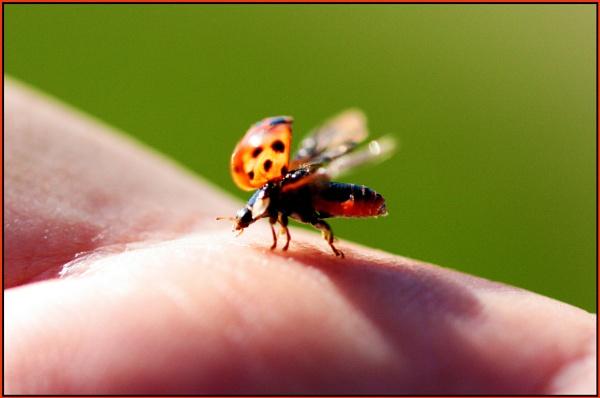 17 spot ladybird by lil48